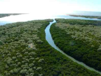 McArthur River from the air